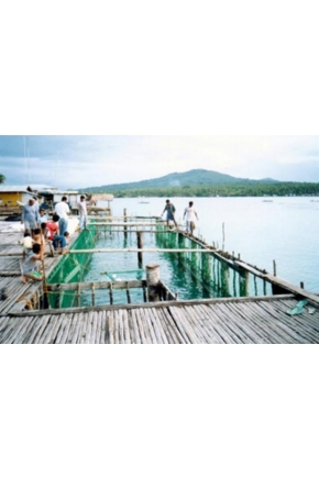 Fishing for Peace: Former Combatants Trade Arms for Fish Farms